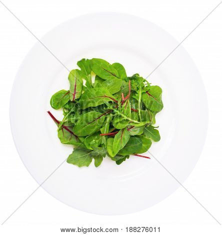 Salad of  chard and ruccola on plate. Studio Photo