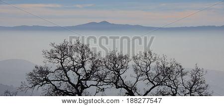 Oak Tree silhouette and Foggy Santa Cruz Mountains. Joseph D. Grant County Park, California, USA.