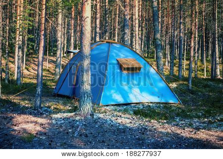 Blue tent in the Karelian sunny pine forest at summer evening. Selective focus.