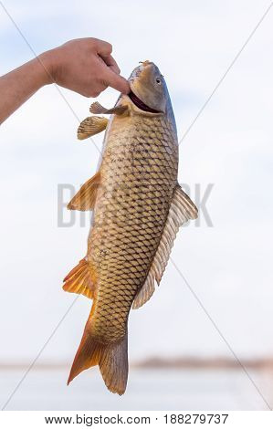 fish cookie on a fishing trip . A photo