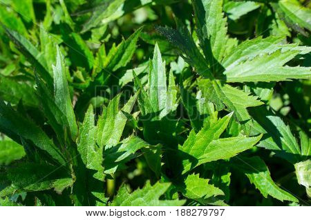 Background of green leaves of garden plants. Studio Photo