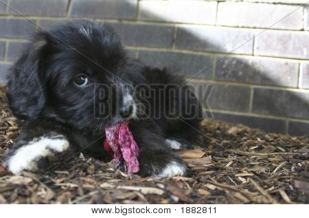 Puppy With A Flower