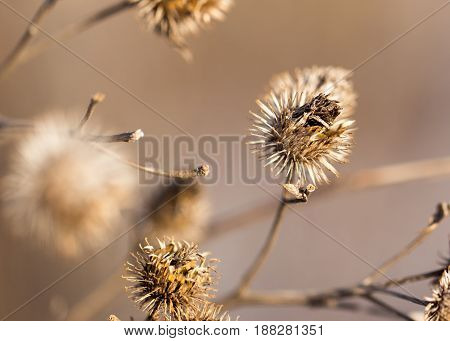 dry branch of flowers. close-up . A photo