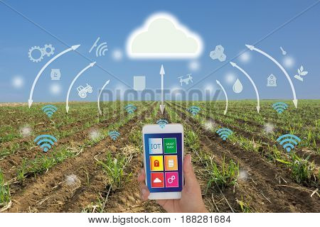 iotInternet of things(agriculture concept)smart farmingindustrial agriculture.Farmer use application in mobile phone and augmented reality technology to control monitor and management in the field