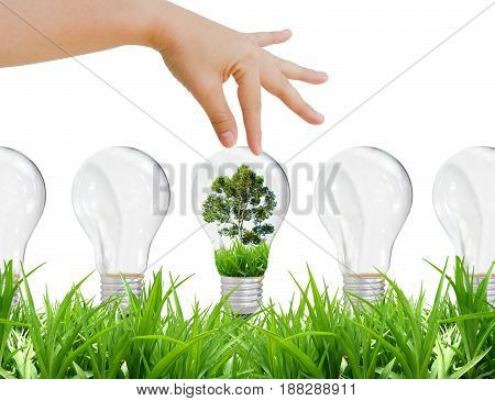 Choose green energy and environment, lamp, grass. Save energy save mother earth concept.