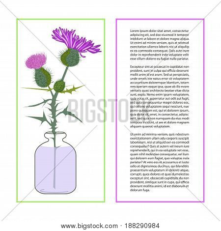 Card with Thistle Flower bud with accurate details in flat style isolated on a white background. Wildflower in glass jar. Place for text. Botany herbs Vector Illustration eps10