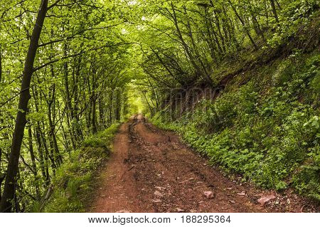 the natural green tunnel road in the forest