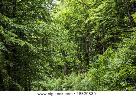 the trees and bushes under the forest road