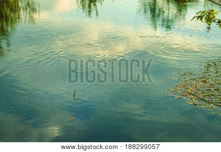 A beautiful river on which floats a lonely fishing float of the tops of green trees are reflected in the water
