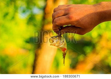 Fishing is very popular all over the world a fisherman holds in his hand a small trophy