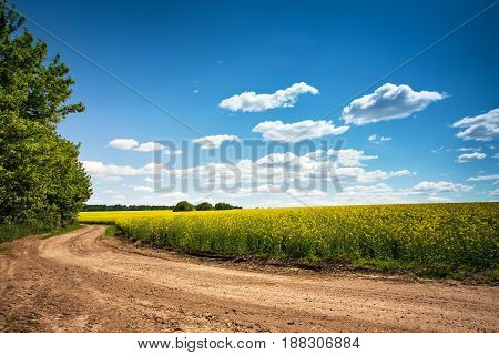 Dirt Road In Flowering Field, Beautiful Countryside, Sunny Day