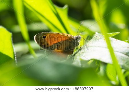 Macro picture of a butterfly on a leaf of grass