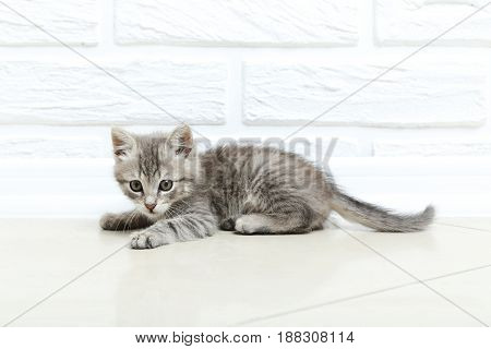Beautiful little cat on floor on a wall brick background