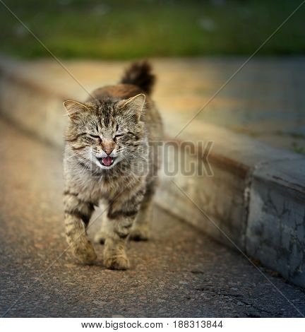 Beautiful kitty goes to earth on a background of asphalt