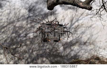 Bird's nest hanging on the branch of a tree
