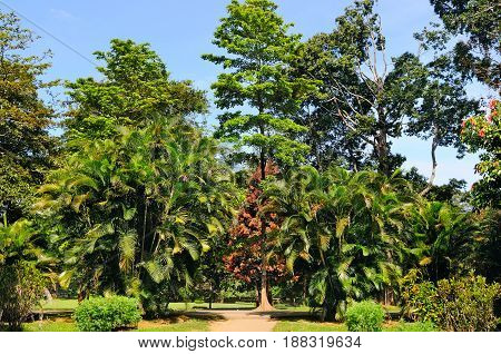 Tropical palm trees and other deciduous trees in a city park