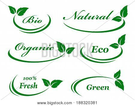 eco set of background with green leaves and decorative line