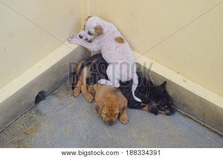 Dog and Puppies in the corner of Scare