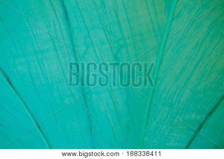 Beautiful green background and texture paper for background