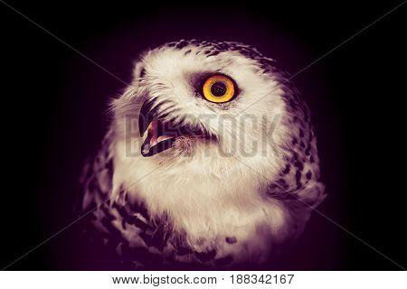 owl night bird in the forest, dark tone