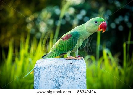 Parrot, lovely bird, animal and pet in the garden