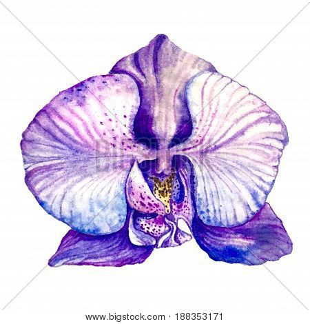 Watercolor isolated hand-drawn purple orchid white background