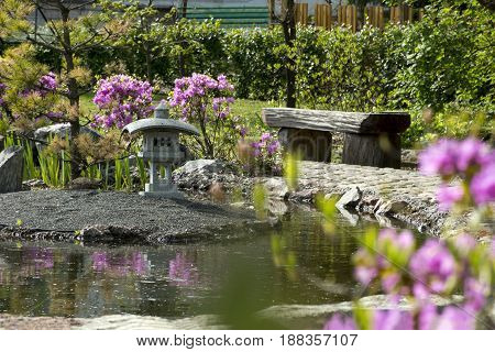 garden in the Japanese style bench from wood pond shrubs with pink flowers rhododendron track stone