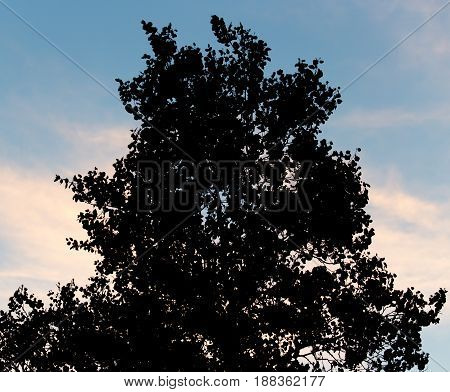 silhouette of a tree on a background of dawn.