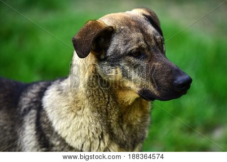 cute homeless dog or pet friend with lush hair or fur on blurred natural background outdoor