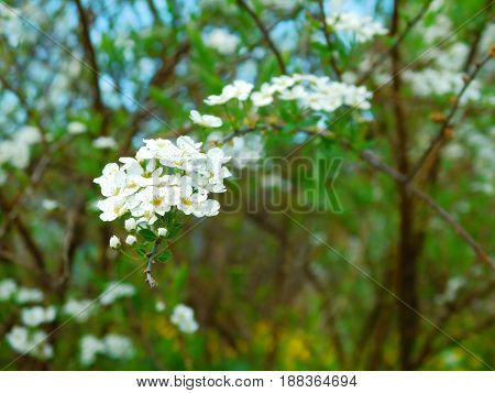 Small flowers on a branch illuminated by the sun rays
