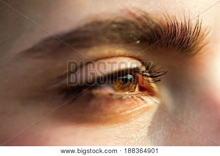 eye of woman or girl brown color with long eyelashes and eyebrow on young face skin. No makeup. Natural beauty. Sight. Vision. Ophthalmology