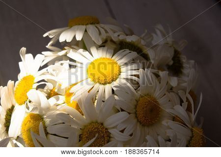 Bouquet of white daisies on wooden background