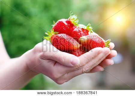 In The Hands Of A Strawberry .