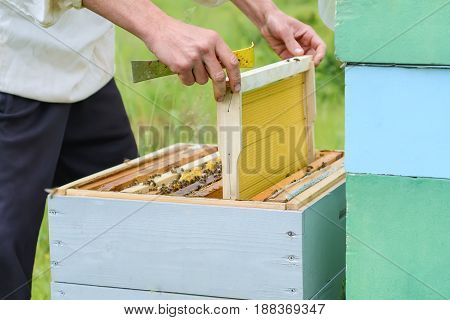 The beekeeper places the hive a new framework for honey. Honeycomb