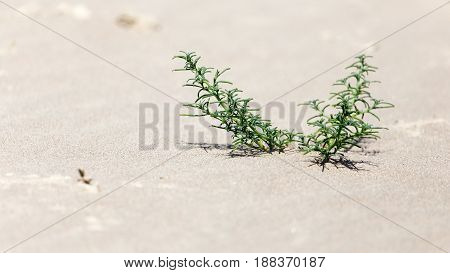 plant in the sand on the shore.