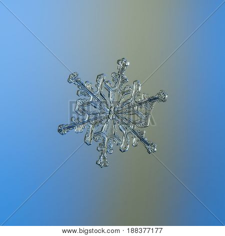 Real snowflake macro photo: stellar dendrite snow crystal with ornate arms, side branches and glossy, relief surface. Snowflake glitters on bright blue - gray gradient background in cold light.
