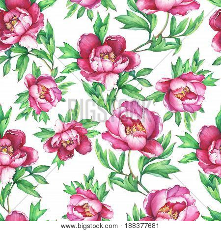 Vintage floral seamless pattern with flowering pink peonies, on white background. Elegance watercolor hand-drawn painting illustration. Isolated. Design for fabric, wrap paper or wallpaper.