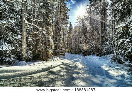 Beautiful landscape. Winter forest, path, lights of a sun
