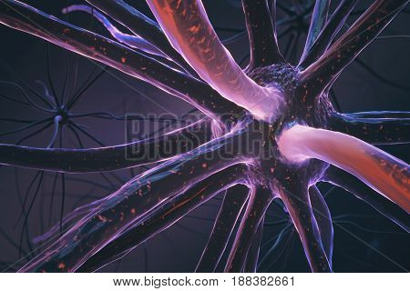 Closeup Of Pink Neuron