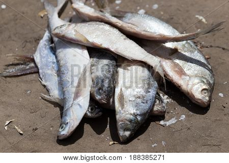 salted fish on the ground . A photo