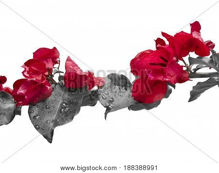 Flowers And Leaves Isolated