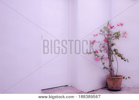 Flower in the pot. White wall and door. Beautiful pink flowers. Puerto Banus, Marbella, Andalusia, Spain.