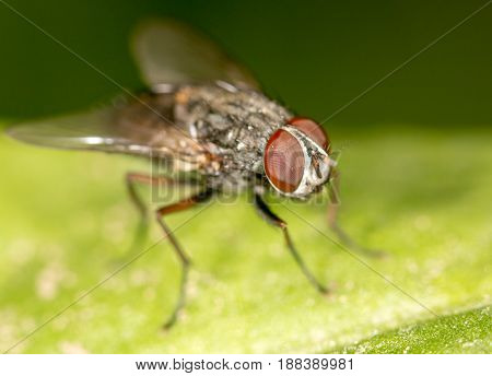A fly in nature. close-up . A photo