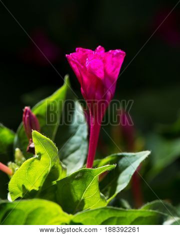 red flower in nature . Macro photo in nature