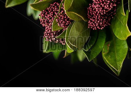Red and pink flowers on a Skimmia