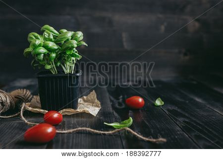 Fresh basil in pot and tomato on the wooden background with copy space.