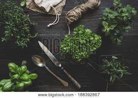 Fresh herbs on the dark wooden table, top view. Rustic background.