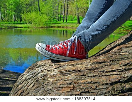Girl's legs in jeans and red sneakers. She sits on thick inclined trunk of old willow near beautiful lake in wood or forest park.