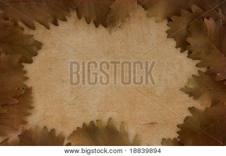 Brown dried oak leaves on paper - framed background