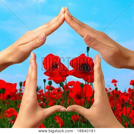 Female hands showing home sign over red summer poppy field conceptual isolated with clipping path